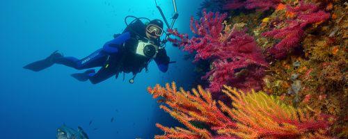 bateig o curs de submarinisme